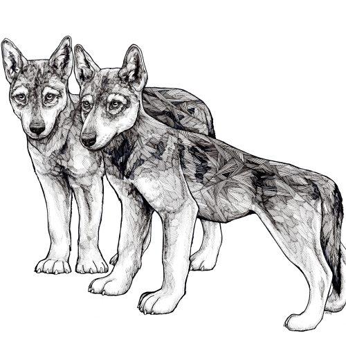 Ian MacLeod_wolf _cubs 5x7
